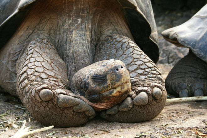 Черепахи спят зимой