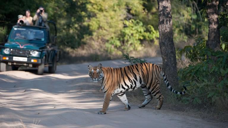 Национальный Парк Бандхавгарх