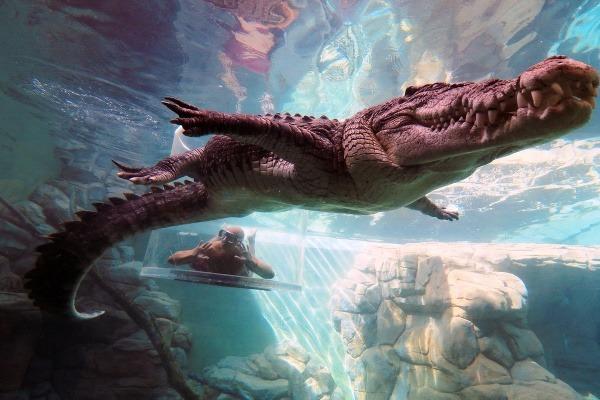 Crocosaurus Cove, Австралия