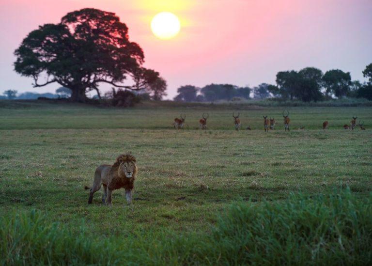Национальный Парк Кафуэ, Африка