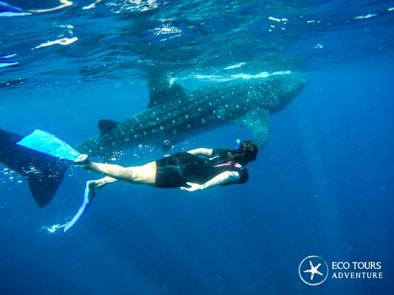 Юкатан, Мексика акулы