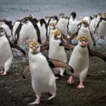 Животное царство: 12 Мест, Где Правят Определенные Виды Животных
