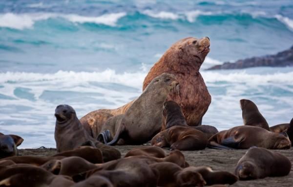 Остров тюленей