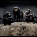 10 Агрессивных Территориальных Животных