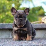 10 Самых Медленных Маленьких Пород Собак