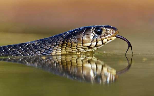 О Водяных Змеях