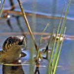 5 Основных Фактов О Водяных Змеях