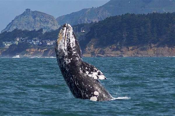 Наблюдение за китами в Пойнт-Висенте