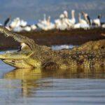 5 Самых Опасных Крокодилов Для Человека