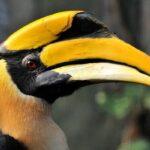 5 Очаровательных Птиц С Большими Клювами