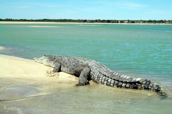Коста-Рика крокодил