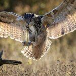 10 самых сильных хищных птиц