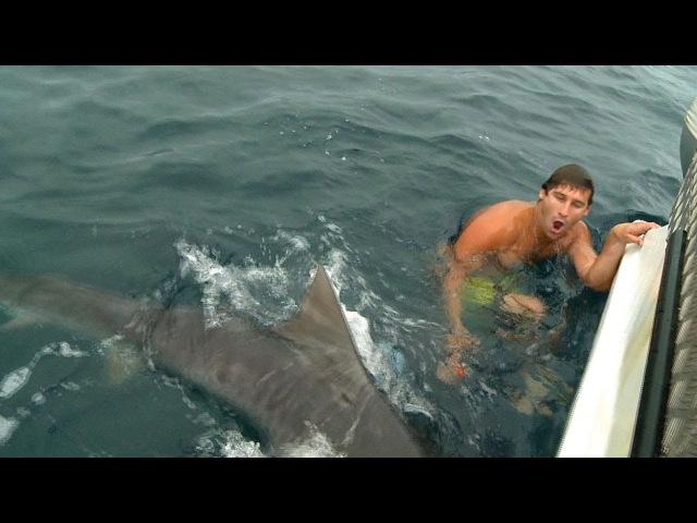 тупорылая акула нападает на людей