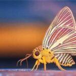 10 интересных фактов о бабочках