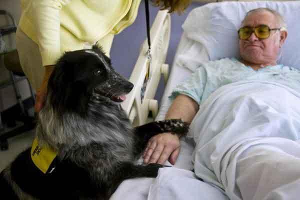 Собаки чуют запах рака