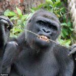 Топ-10 животных с самым сильным укусом в мире