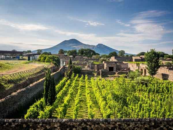Экскурсия по виноградникам Кастелли Романи