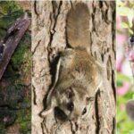 10 удивительных примеров конвергентной эволюции