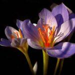 10 Самых Красивых Цветков Цветущих Ночью