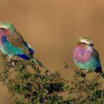 11 уникальных экзотических птиц