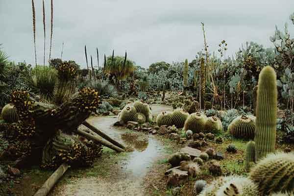 Страна кактусов, Мельбурн