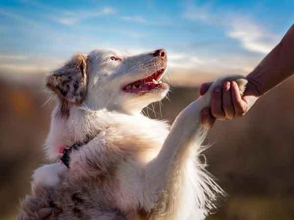 Собака – лучший друг человека