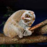 Топ-10 Самых Красивых Ночных Животных