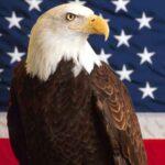Топ-10 животных США