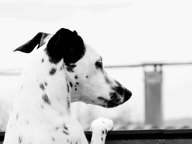 Собаки видят мир черно-белым