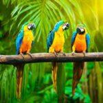 10 самых умных говорящих птиц в мире