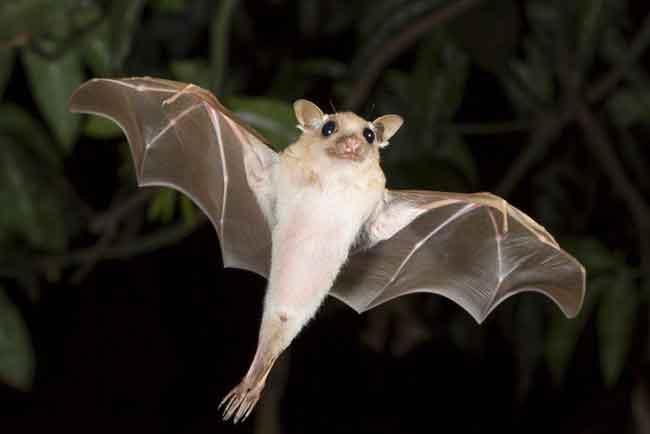 Летучие мыши слепы