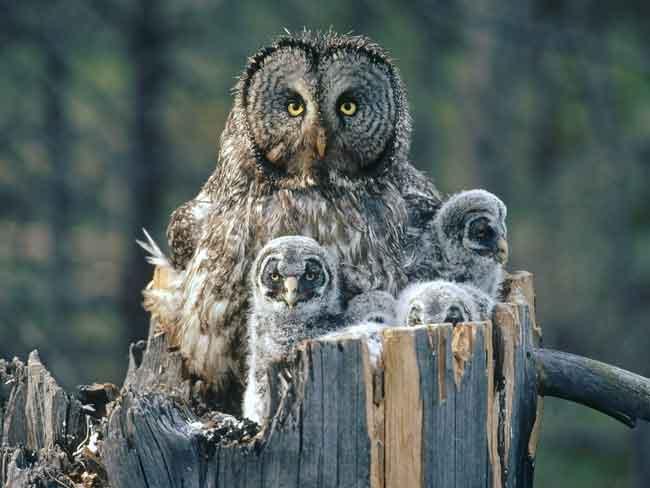 Совы самые мудрые среди птиц