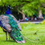 Top 10 Индийских Животных
