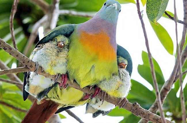 птицы с птенцами