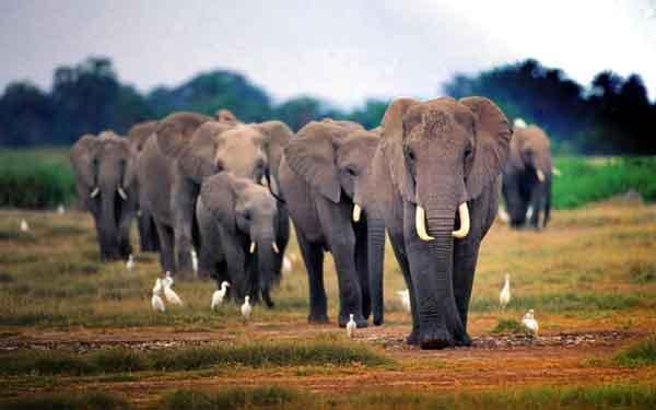 Память как у слона