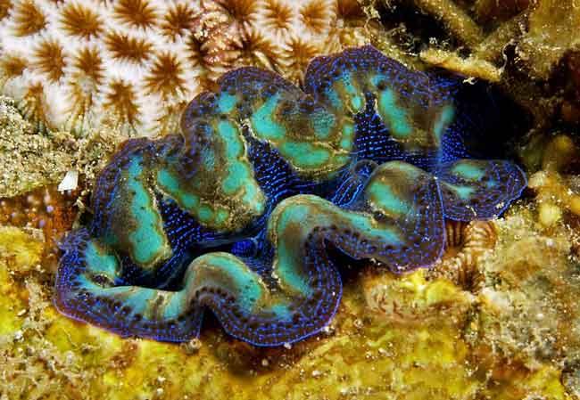Моллюски с голубой кровью