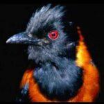5 Самых Ядовитых Птиц В Мире