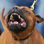 10 пород собак, которые могут нанести наибольший вред человеку