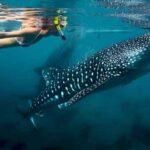 10 Безвредных Акул, С Которыми Можно Безопасно Плавать