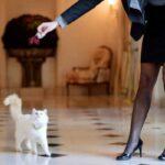 10 самых удобных отелей для домашних животных в мире