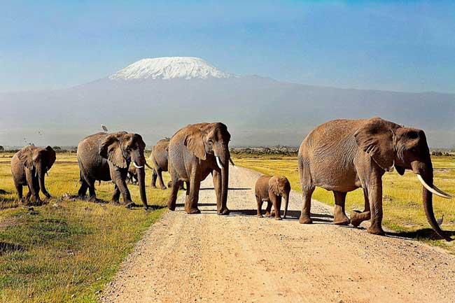 Действия по сохранению слонов