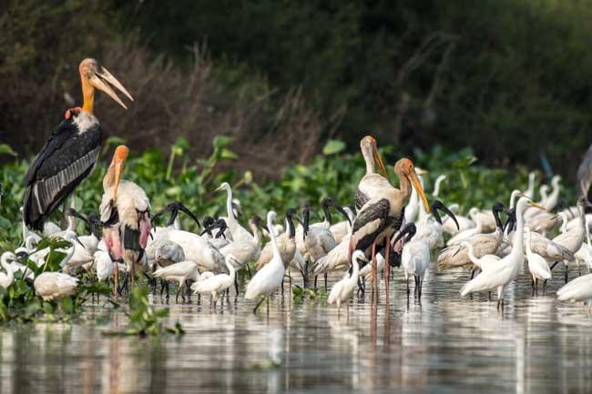 Богатое биоразнообразие реки Меконг