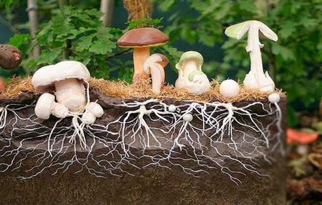 Мицелиальные сети гриба