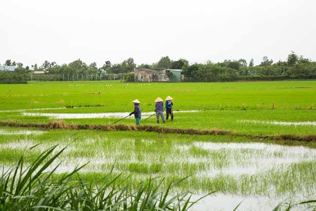 Дельта Меконга может быть затоплена к 2030 году