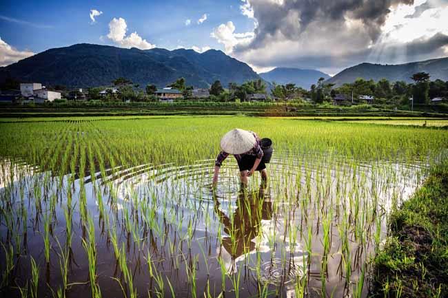 """бассейн нижнего Меконга, называют """"рисовой чашей"""" Азии"""