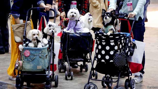 Домашние животные — это семья в США