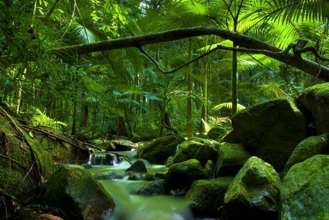Национальный парк Дейнтри