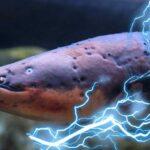 Биоэлектрогенетические Животные: 7 Существ, Которые Могут Генерировать Электричество