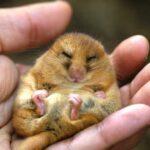 Биологический Сонар: 10 Животных, Использующих Эхолокацию