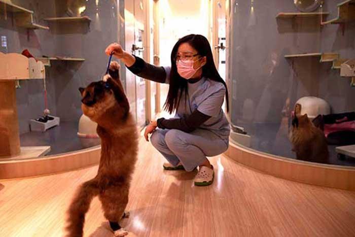 VAC Cat Hotel & Spa, Дешан, Китай